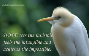Motivational Quote on Hope: Hope sees the invisible,feels the intangible