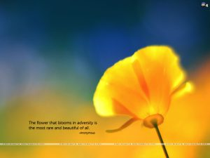 Adversity and flower blooming motivational wallpaper dontgiveup! (86)