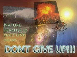 nature teaches don't give up