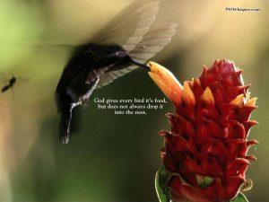Motivational Wallpaper on God : God gives every bird its food,