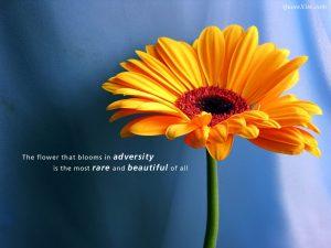 Motivational Wallpaper on Adversity (2)