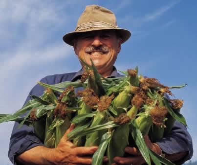story of a farmer who grew award winning corn