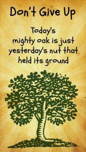 Wallpaper Yesterdays Nut Todays Mighty Oak